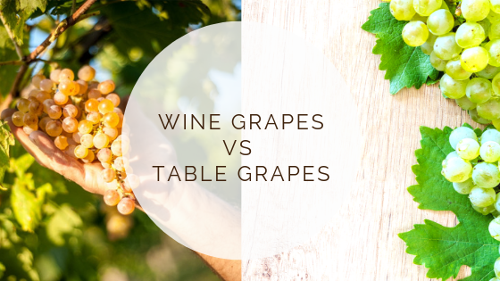 Wine grapes vs table grapes t e s s a r i - Table grapes vs wine grapes ...